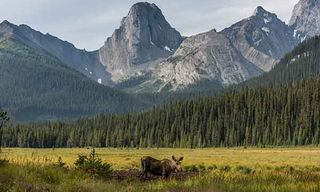 Wildlife Of The Canadian Rockies