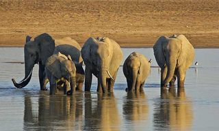 Classic South Luangwa Safari