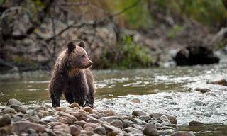 British Columbia'S Wildlife Highlights