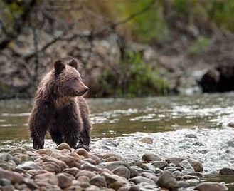 British Columbia'S Wildlife Highlights