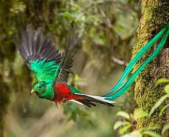 Costa Rica'S Wildlife Wonders
