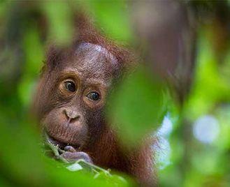 Borneo Rainforest Photography Workshop
