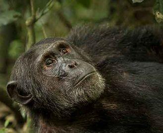 Uganda'S Unforgettable Wildlife