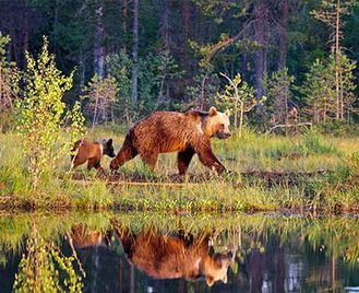 Bears, Wolves & Wolverines Self-Drive
