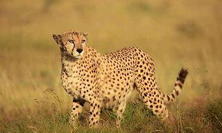 Masai Mara Photo Safari