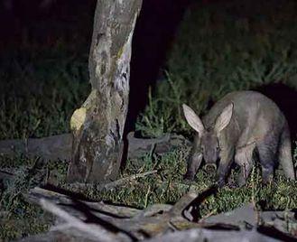 Botswana'S Rare Mammals