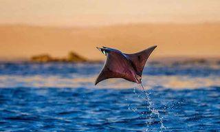 Sea Of Cortez Wildlife Voyage