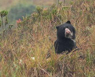 Colombia'S Rare Mammals