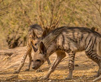 North-West India'S Rare Mammals