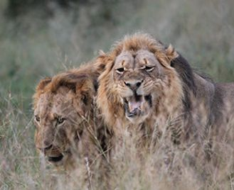 Classic Zimbabwe Safari