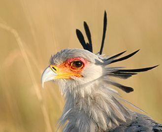 Kenya'S Birds & Wildlife