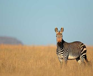 Natural Highlights Of South Africa