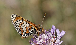 Birds, Butterflies & Wildflowers Of The Dordogne