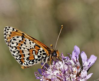 Birds, Butterflies & Wildflowers Of The Dordogne
