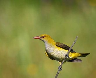 Spring Birds, Orchids & Prehistory In Wild Dordogne