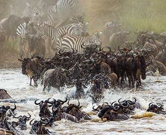 Serengeti Migration Special