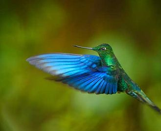 Colombia Bird Photography