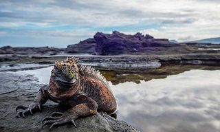 Galápagos Exclusive With Mark Carwardine