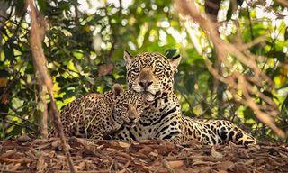 Brazil'S Big Five Photo Safari (Was North Pantanal Photo Safari)