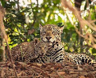North Pantanal Photo Safari