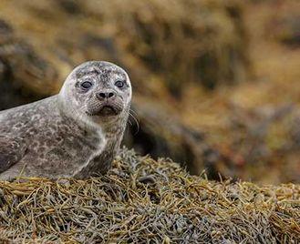 Isle Of Mull Wildlife Cruise