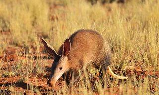 South Africa'S Rare Mammals Photo Safari