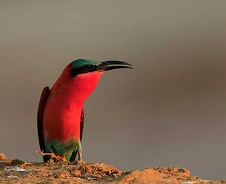 Easy Birding In South Luangwa