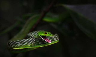 Amphibians & Reptiles Of The Western Ghats With Nick Baker