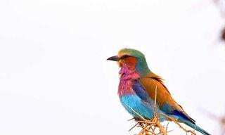 Birds & Mammals Of The Serengeti & Beyond