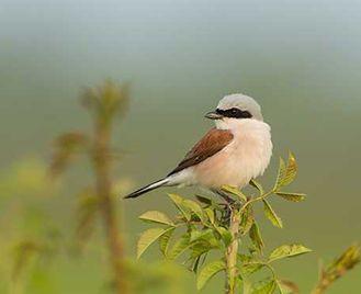 Birding In Krakow & The Carpathians