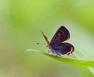Butterflies & Moths Of Southern Poland