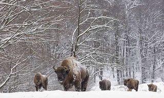 Poland'S Winter Wildlife