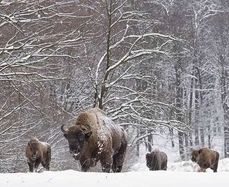 Poland'S Winter Wildlife