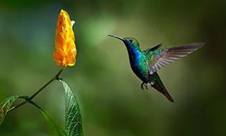 Easy Birding In Trinidad