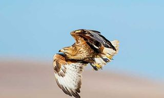 Birding The Land Of Genghis Khan