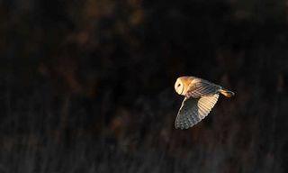 Norfolk In Late Winter