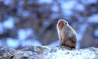 Japan'S Winter Wildlife Photography Special