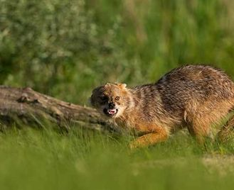 Romania'S Wildlife Highlights