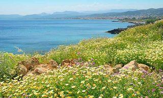 Crete'S Spring Flowers & Birds