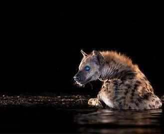 Zimanga – Wildlife & Night Sky Photography