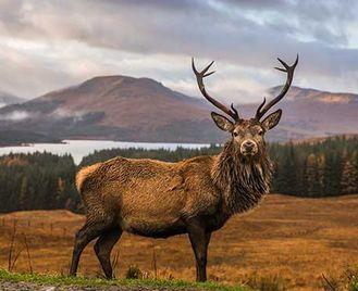 Isle Of Mull Wildlife In Autumn