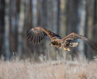Winter Wildlife Photography In Poland