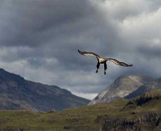 Isle Of Mull Wildlife Photography