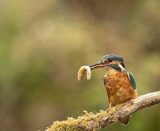 Hampshire Bird Photography Workshop