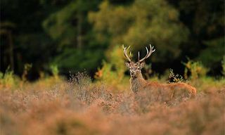 New Forest Deer Photography Workshop
