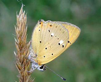 Butterflies & Birds Of Bulgaria