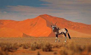 Namibia Wildlife & Wilderness
