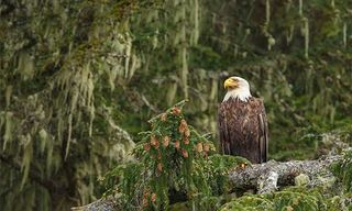 Safari Slowly On Canada'S West Coast