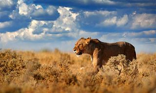 Botswana Sketchbook Safari With Trevor Waugh