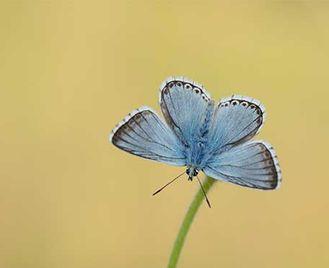Butterflies & Birds Of Sussex
